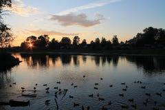 ducks озеро стоковая фотография rf