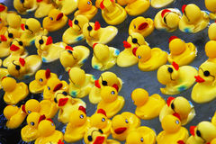 ducks резина Стоковая Фотография RF