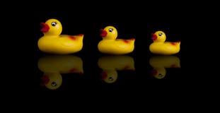 ducks резина 3 Стоковое Фото