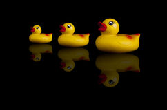 ducks резина 3 Стоковые Изображения