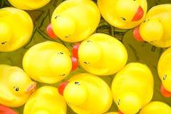 ducks резина Стоковые Фото