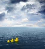 ducks резина 3 Стоковые Изображения RF