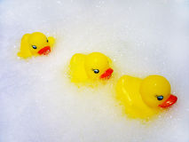 Ducks. Yellow ducks on white spume Stock Images