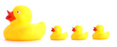 Ducks. A happy family of ducks Stock Images