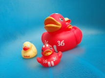 Ducks. Rubber duck family Stock Photos