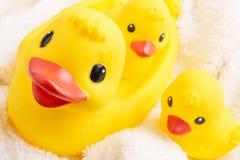 Ducks3 Stockfotos
