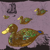 The ducks Royalty Free Stock Images