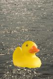 Ducks ahoy. A composite image of a rubber duck floating on water with highlights of sunlight reflections Royalty Free Stock Photos