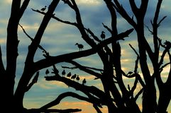 Free Ducks At Dawn Royalty Free Stock Photography - 12841597