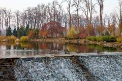 Ducks on an autumn pond Stock Photo