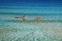 Ducks, birds, feeding. Two ducks in the bright blue water with fish in its beak Stock Photo