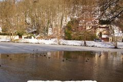 Ducks in a lake frozen - France. Ducks and birds which swim in a lake frozen with an icy frosty water. It is in the day and in winter season. Shooting without Royalty Free Stock Images