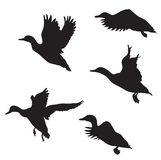 Ducks. Black silhouettes of ducks on white background royalty free illustration