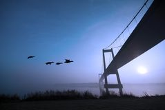 Ducks and blue bridge Stock Photography