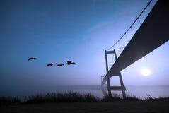 Ducks and blue bridge Stock Photography