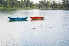 Ducks and blue and red Boats.  Stock Images