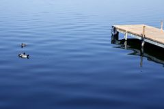 Ducks on blue water near a wooden dock Royalty Free Stock Image