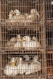 Ducks Cages Abattoir Royalty Free Stock Image
