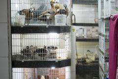 Ducks in cages for sale Stock Photography