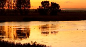 Ducks on calm lake at sunset Stock Image