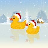 Ducks celebrate Christmas Royalty Free Stock Photography