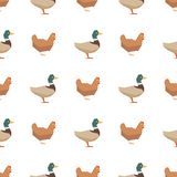 Ducks and chickens seamless pattern royalty free illustration