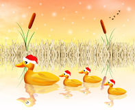 Ducks at Christmas Stock Image