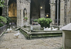 Ducks in and beside a church pond in Barcelona, Spain Royalty Free Stock Image