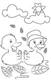 Ducks coloring page Stock Photography