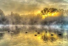 Ducks on the dam Stock Image