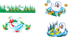 Ducks in different variants Stock Photo