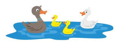 Ducks family. On the see Stock Image