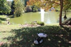 Ducks, fish. Crystal Palace, Retiro Park, fountain. Madrid, Spain. stock photos