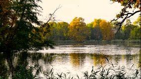 Ducks flying over an autumn lake stock footage