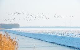 Ducks flying over a canal  in winter Stock Photo