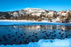Winter Landscape with Snowy Mountain and Ducks in A Frozen Lake royalty free stock image