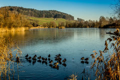 Ducks on a frozen lake. In winter. The blue sky seen in reflection Royalty Free Stock Images