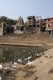 Ducks and geese, Banganga Tank, Mumbai Royalty Free Stock Photos