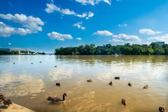 Ducks and Geese in the River with Kennedy Center in background royalty free stock photography