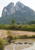 Ducks in Guilin. Ducks enter the water from a harvested rice field in Guilin with the scenic limestone monoliths that make Guilin so memorable in the background Royalty Free Stock Photography
