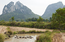 Ducks in Guilin Stock Photos