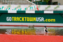 Ducks at Historic Hayward Field Eugene, OR Royalty Free Stock Images