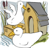 Ducks and house. Two ducks in front of cute duck house Royalty Free Stock Photography