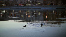 Ducks on an ice floe in the city stock video