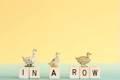 Ducks iin a row Stock Photo