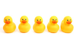 Free Ducks In A Row Royalty Free Stock Photography - 45354877
