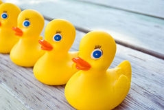 Free Ducks In A Row Stock Photo - 9956380