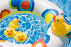 Free Ducks In Summer Royalty Free Stock Photography - 5619217