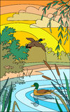 Ducks on the lake. Vector illustration of landscape with ducks Stock Photos
