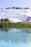 Ducks on the lake, calcified limestone terraces Royalty Free Stock Images